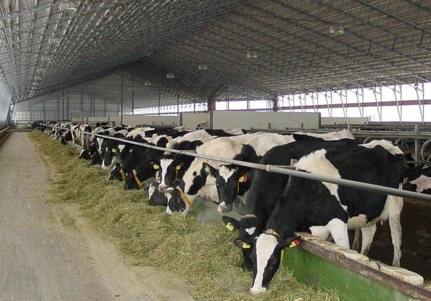 Картинки по запросу содержание коровы